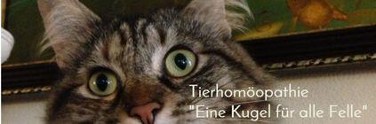 www.tierhom.ch